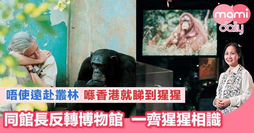 一齊反轉博物館 由館長帶你睇「猩猩」