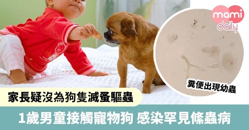 1歲男童接觸寵物狗 糞便現幼蟲染罕見病 家長疑因未為狗隻滅蚤驅蟲所致