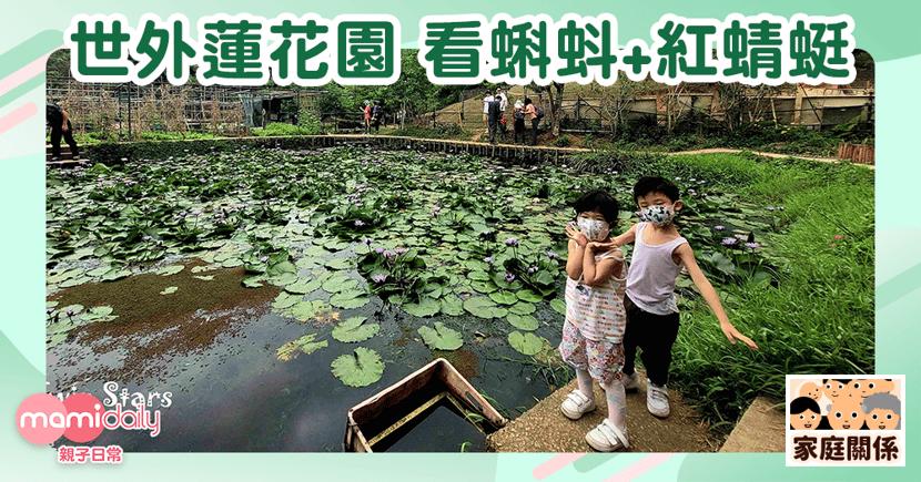 【親子好去處】世外蓮花園 ~看蝌蚪+紅蜻蜓+牛牛
